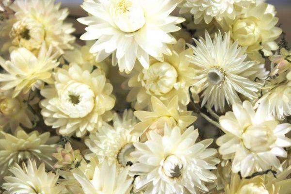 Close-up van gedroogde wit/crème strobloemen