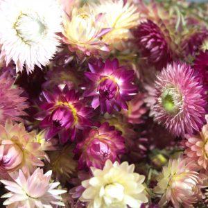 Close-up van strobloem droogboeket in tinten roze en wit