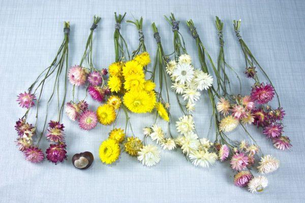 Assortiment van verschillende kleuren strobloem droogbloemen op blauwgrijze ondergrond.